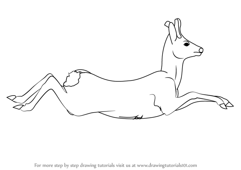 Learn How to Draw a Roe Deer (Wild Animals) Step by Step : Drawing ...