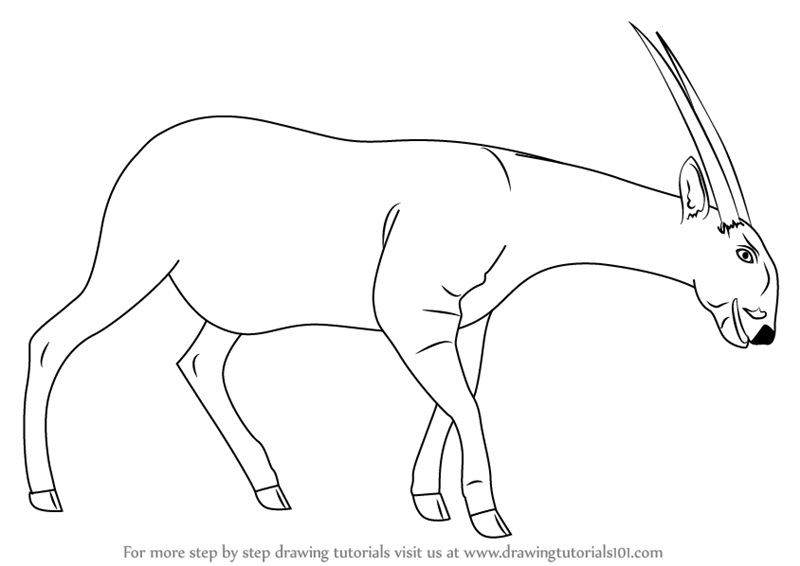learn how to draw a saola wild animals step by step drawing tutorials