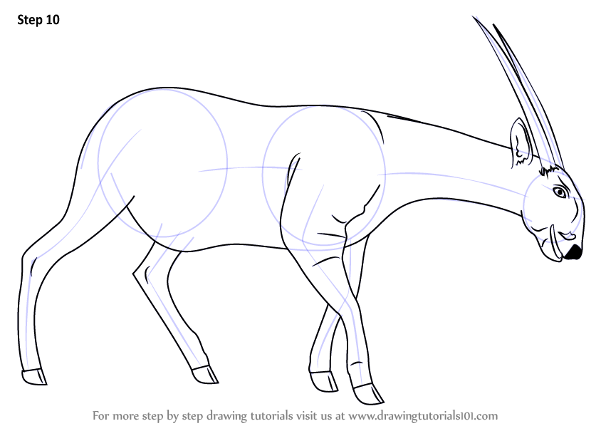 Learn How To Draw A Saola Wild Animals Step By Step