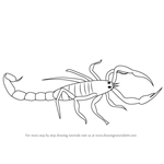 How to Draw a Scorpio