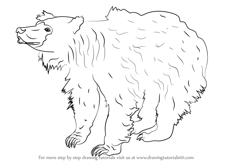 learn how to draw a sloth bear wild animals step by step drawing tutorials