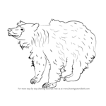 How to Draw a Sloth Bear