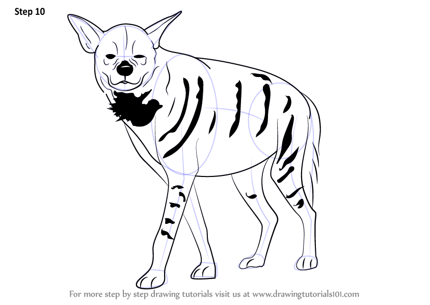 Learn How To Draw A Striped Hyena Wild Animals Step By