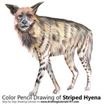 Striped Hyena Color Pencil Sketch
