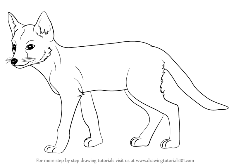 Drawing Lines With Swift : Learn how to draw a swift fox wild animals step by