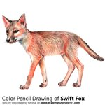 Swift Fox Color Pencil Sketch