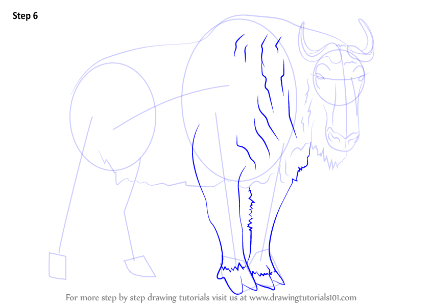 Learn How To Draw A Takin Wild Animals Step By Step