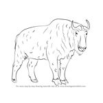 How to Draw a Takin