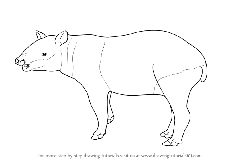 Learn how to draw a tapir wild animals step by step for Tapir coloring page