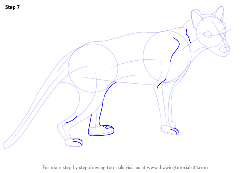 Learn How To Draw A Tasmanian Tiger Wild Animals Step By