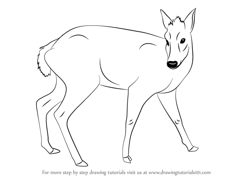 Learn How To Draw A Tufted Deer Wild Animals Step By Step