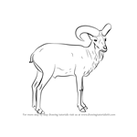 How to Draw a Urial