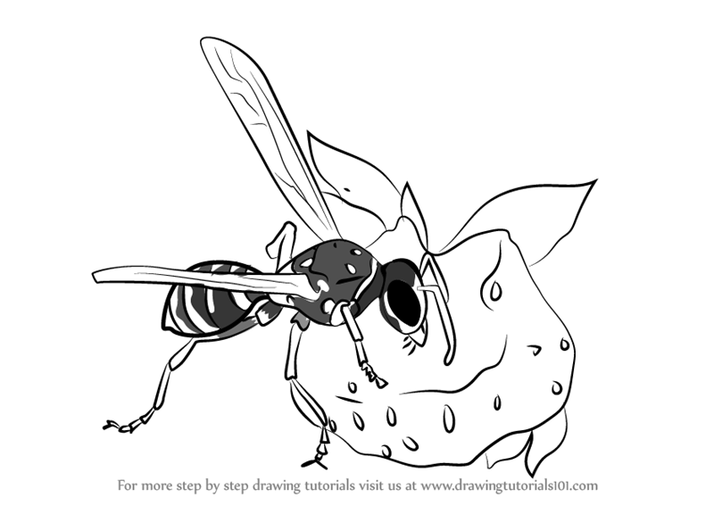 Learn How To Draw Wasp Eating Honey Wild Animals Step By Step