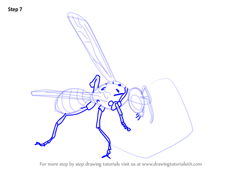 Learn How To Draw Wasp Eating Honey Wild Animals Step By