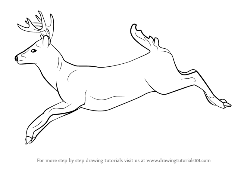 Line Drawings Of Animals Deer : Learn how to draw a white tailed deer wild animals step