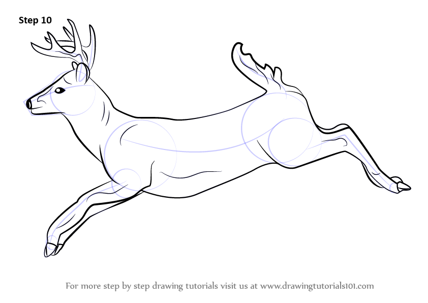 Learn How To Draw A White Tailed Deer Wild Animals Step By Step