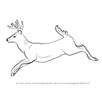 How to Draw a White-tailed Deer