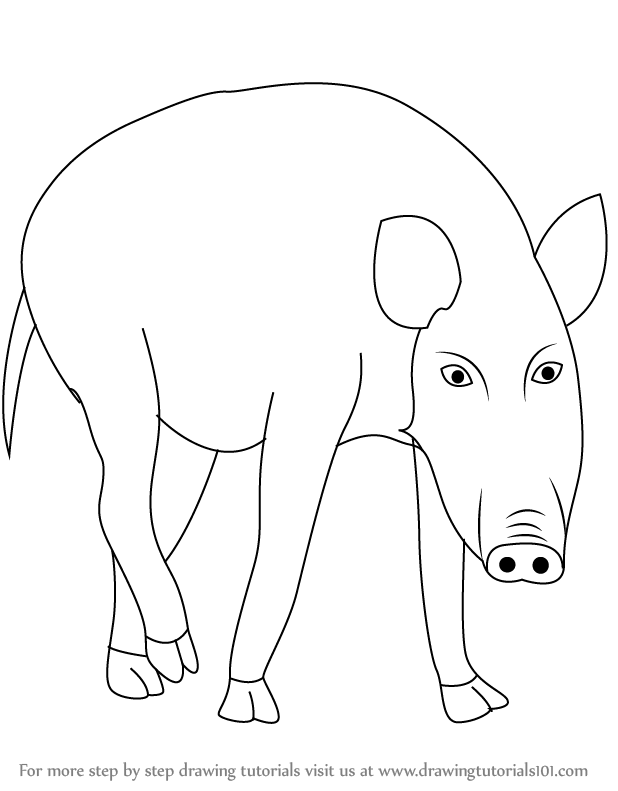 Line Drawings Of Wild Animals : Learn how to draw a wild boar animals step by