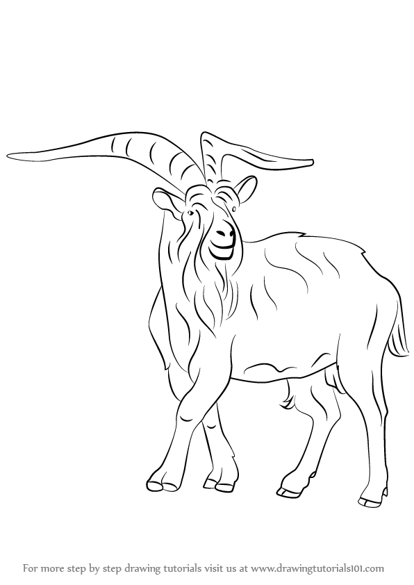 Learn How to Draw a Wild Goat (Wild Animals) Step by Step