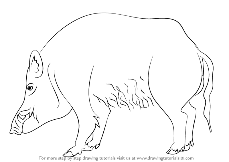 Learn How To Draw A Wild Boar Wild Animals Step By Step