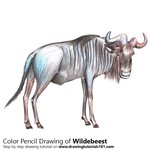 Wildebeest Color Pencil Sketch