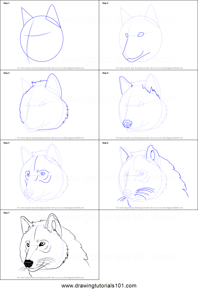 how to draw wolf head step by step