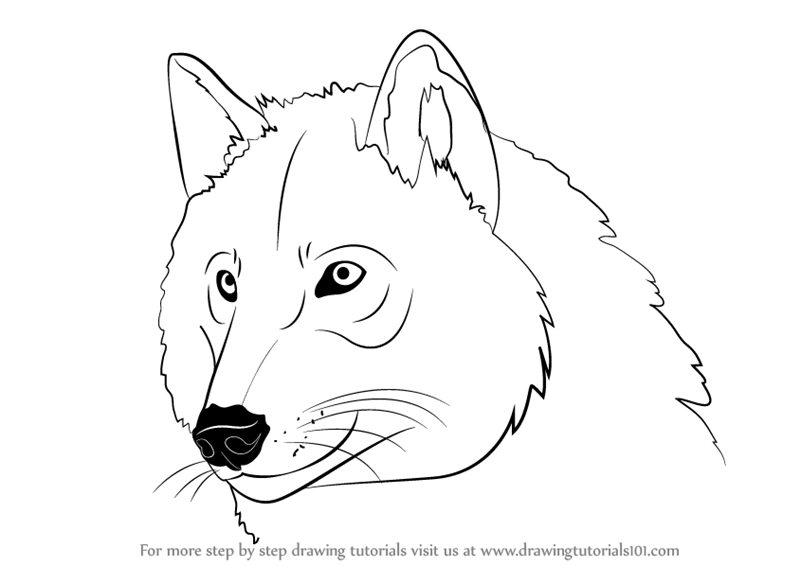 Learn how to draw a wolf head wild animals step by step drawing tutorials