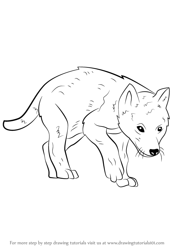 learn how to draw a wolf pup wild animals step by step drawing tutorials