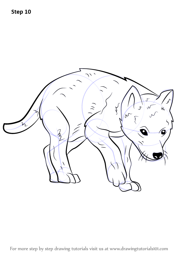 Step by Step How to Draw a Wolf