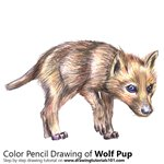 Wolf Pup Color Pencil Sketch