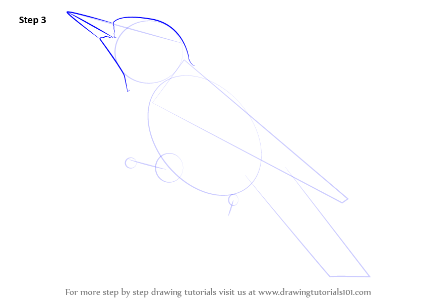 step by step how to draw a hairy woodpecker