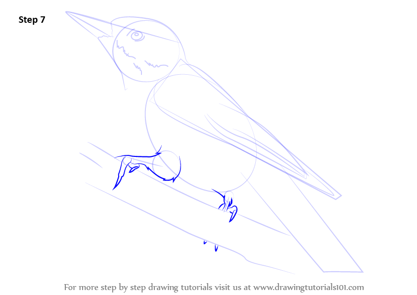 learn how to draw a hairy woodpecker woodpeckers step by