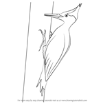 How to Draw an Imperial Woodpecker