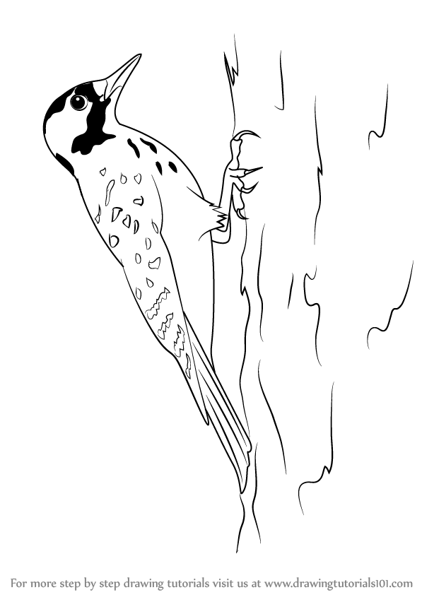 Red House Drawing: Step By Step How To Draw A Red-Cockaded Woodpecker