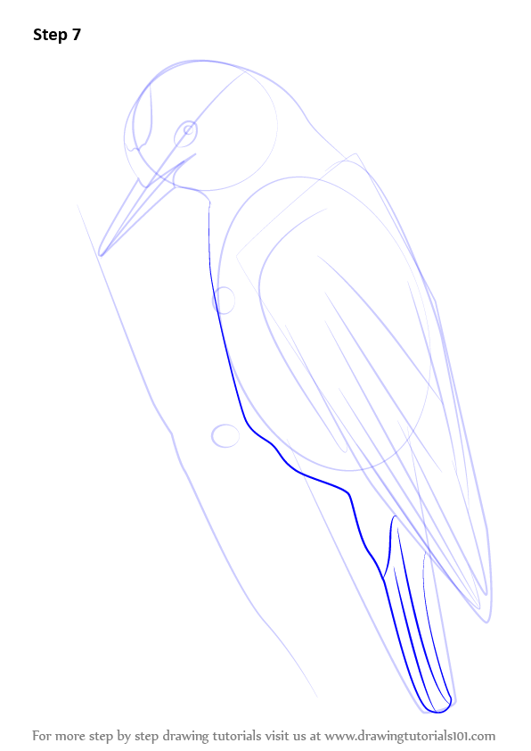 learn how to draw a woodpecker woodpeckers step by step
