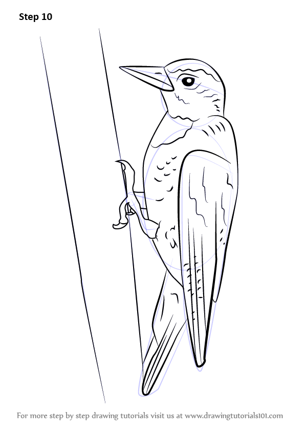 Pileated Woodpecker Coloring Page A K B Info