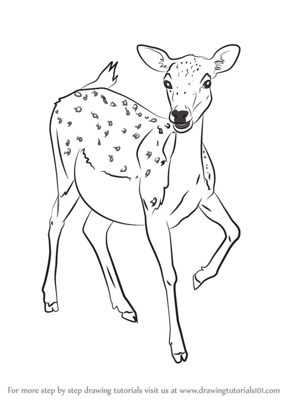 learn how to draw a baby deer zoo animals step by step