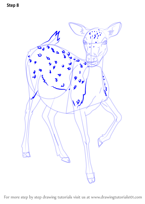 step by step how to draw a baby deer drawingtutorials101com