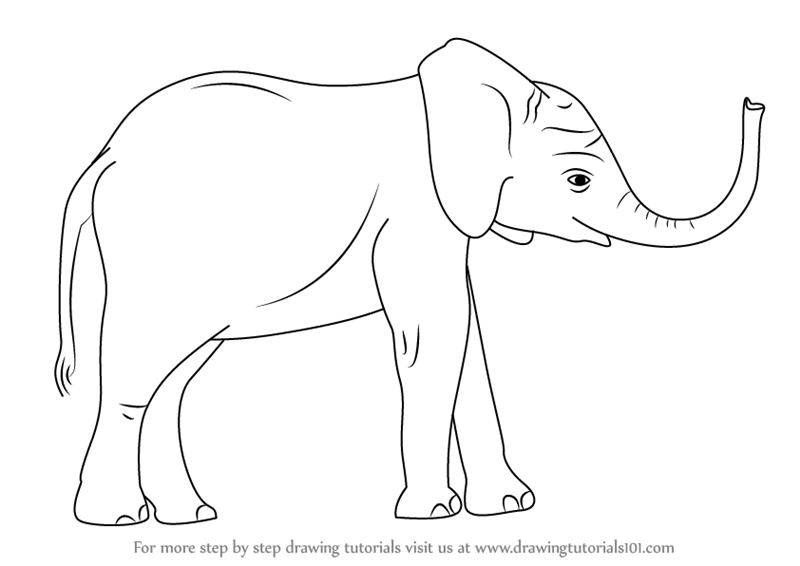 Step by Step How to Draw a Baby Elephant ...