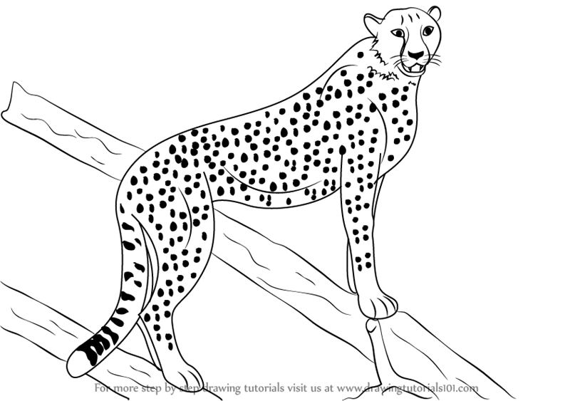 How To Draw A Cheetah Eye