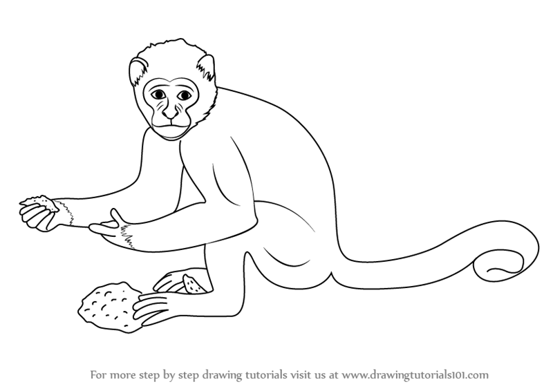Learn how to draw a monkey zoo animals step by step drawing tutorials