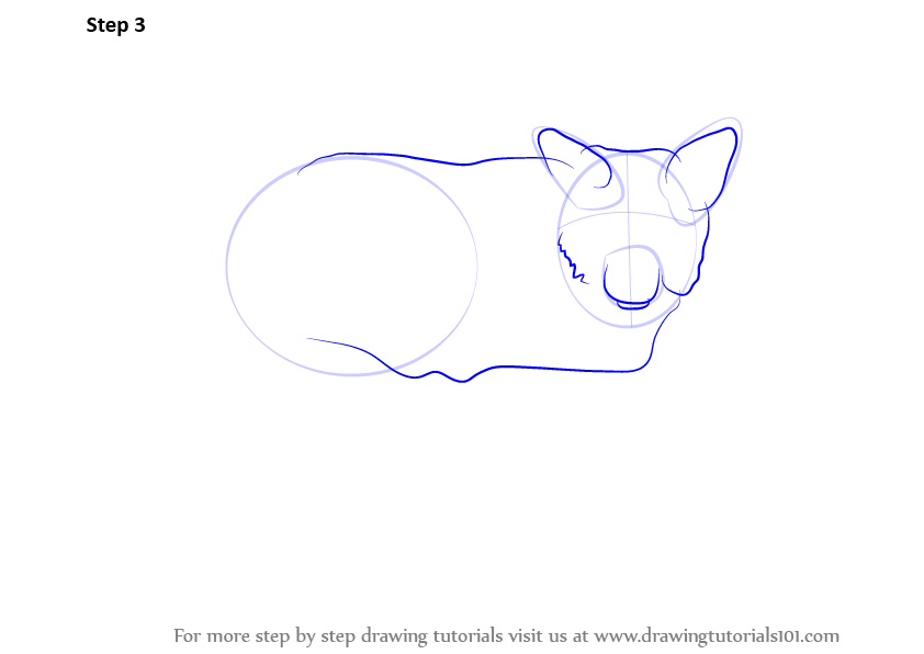 How to draw a wolf body - photo#24