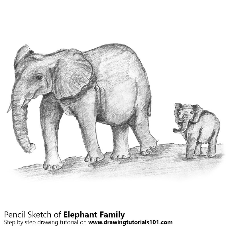 Elephant family pencil drawing how to sketch elephant family using pencils drawingtutorials101 com