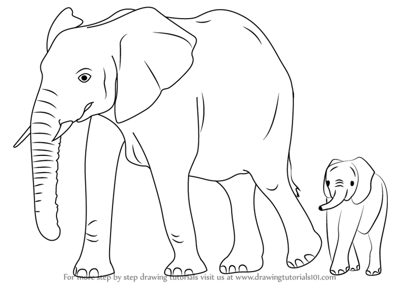 Learn How To Draw An Elephant Family Zoo Animals Step By Step