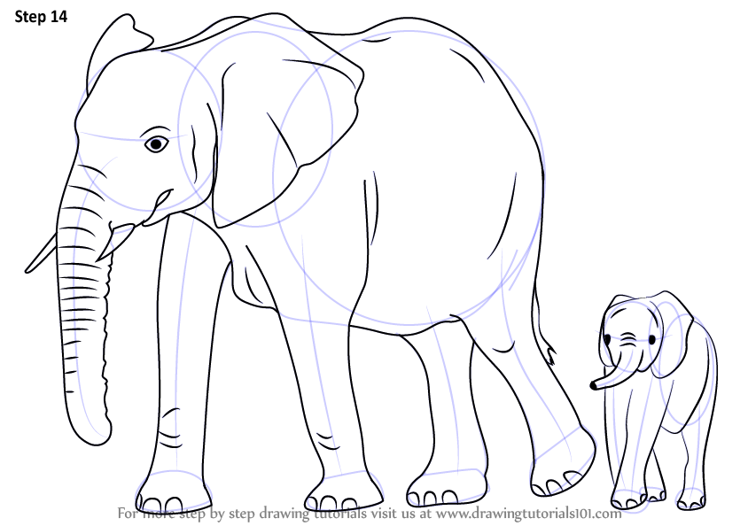 Learn How To Draw An Elephant Family (Zoo Animals) Step By Step  Drawing Tutorials