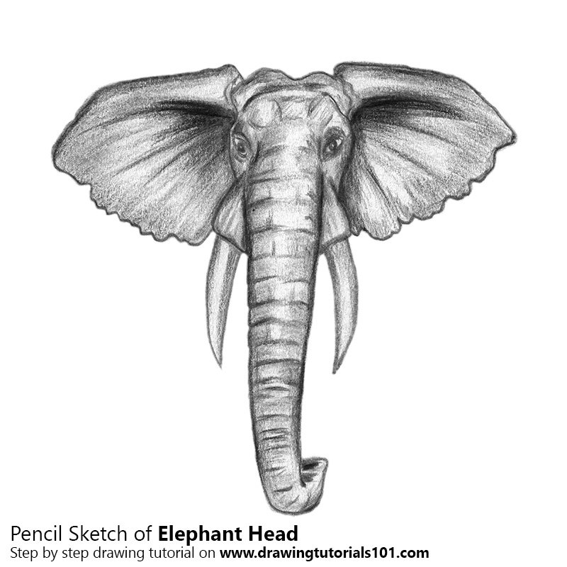 Elephant Head Color Pencil Drawing
