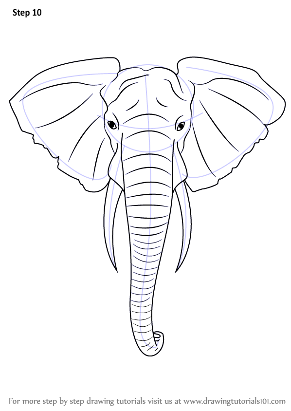 Line Drawing Elephant Face : Learn how to draw an elephant head zoo animals step by