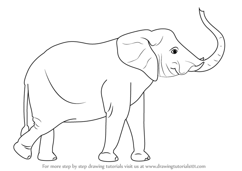 Learn How To Draw An Elephant With Its Trunk Up Zoo Animals Step