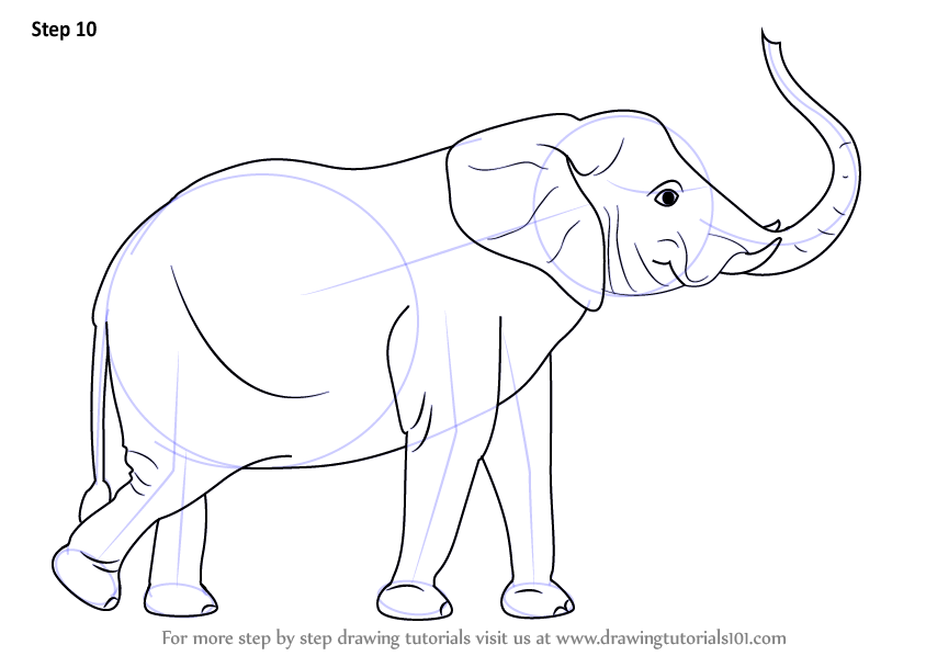 Image of: Step Make Necessary Improvements To Finish Drawingtutorials101com Learn How To Draw An Elephant With Its Trunk Up zoo Animals Step