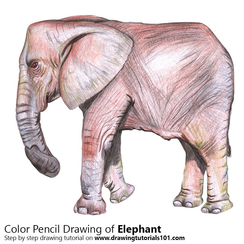 Elephant Color Pencil Drawing